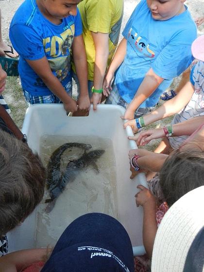 Fischer kümmern sich um unsere Gewässer! Hege und Pflege ist wichtig