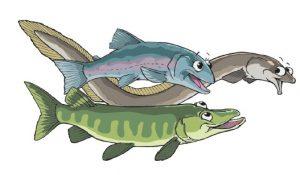 FMS Comicfische