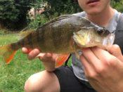 Fischerjugend Barsch